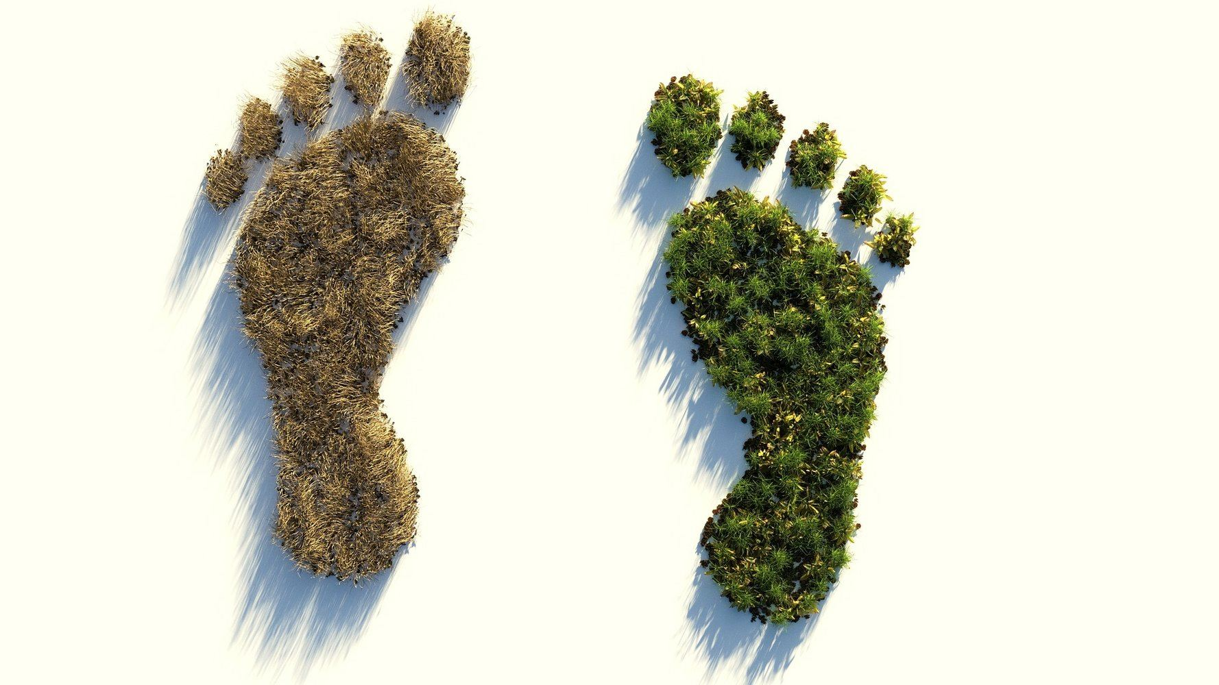 ecological-footprint-4123696_1920-jpg__1920x1000_q85_subsampling-2